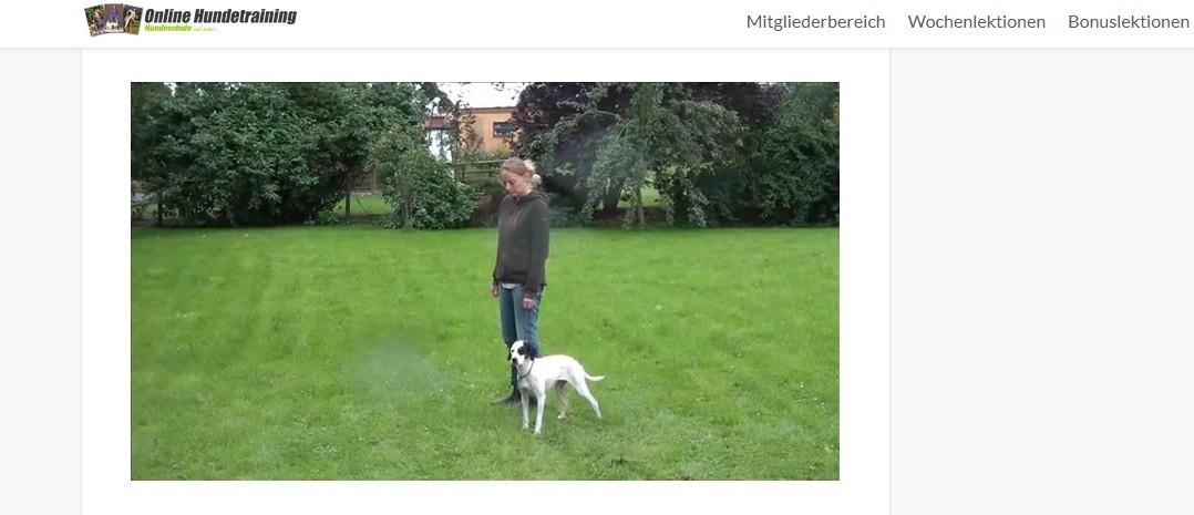 Erfahrungen-zum-Online-Hundetraining-von-Johanna Esser.jpg