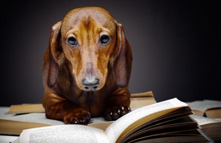 Hundeerziehung-Hundeschule-online-training